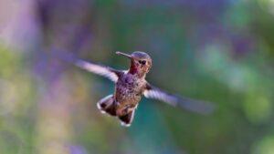 Presenteren zonder spreekangst, is als vliegen zo vrij als een vogel.